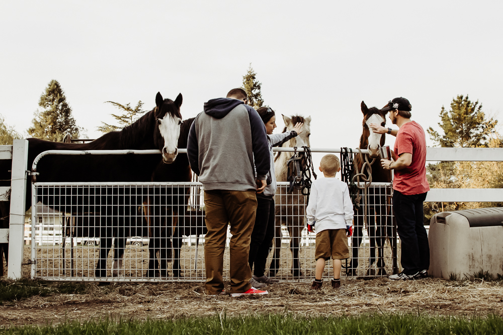 family petting horses on ranch gilroy california {virginia beach lifestyle newborn child couples family maternity engagement photographer}