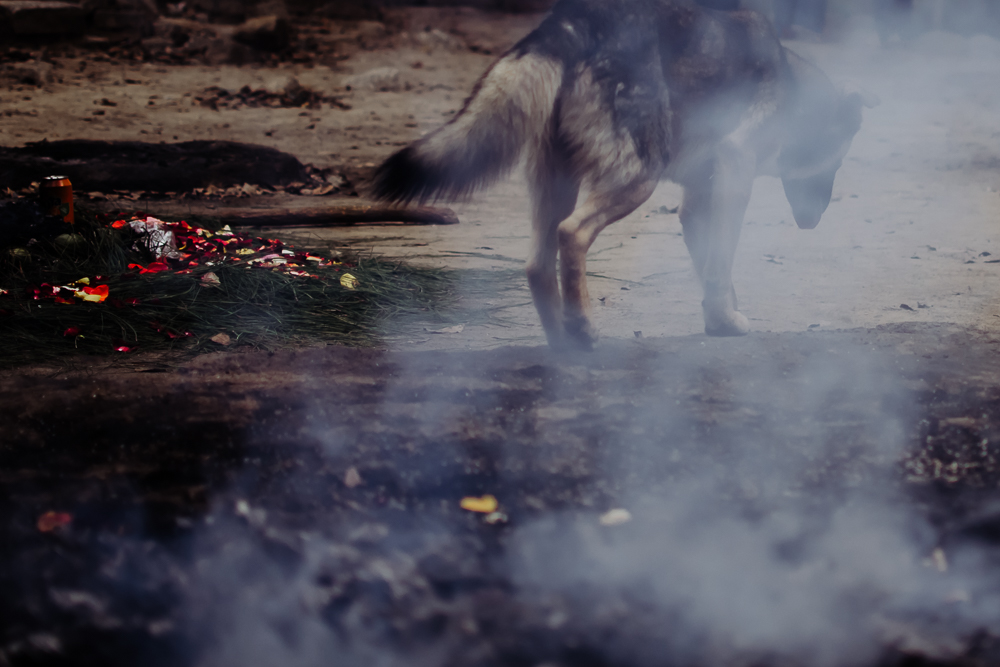 wild dog indigenous mayan shamanic ceremony antigua guatemala {virginia beach chesapeake lifestyle child couples family military homecoming photographer holistic healer transformational mentor}