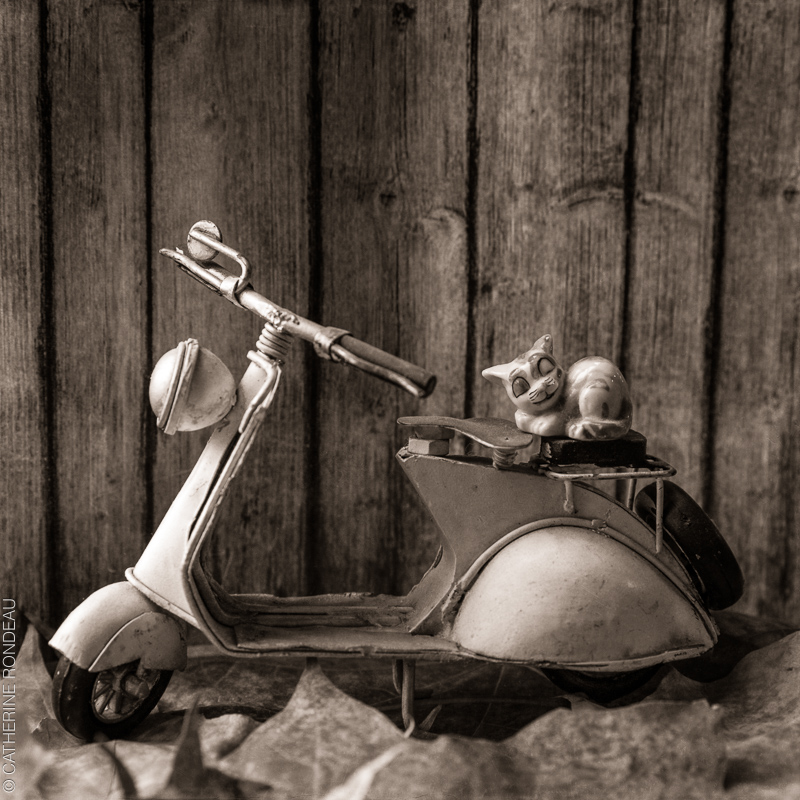 Cat figurine on miniature motor bike.