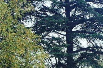 arbres dans parc