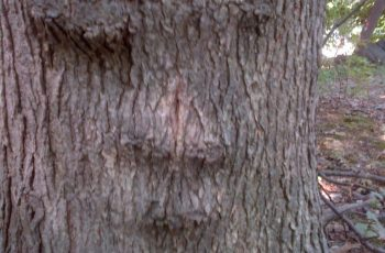 God's Creation: The Secret Life Of Trees