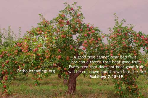 A Good Tree Cannot Bear Bad Fruit – Matthew 7:18-19 - Bible Verse of the Day