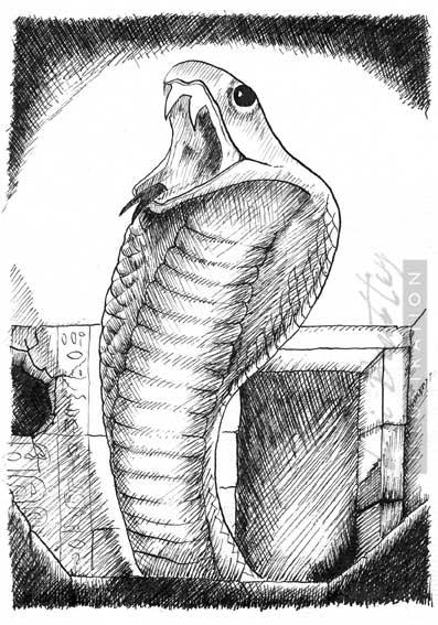 cobra-small