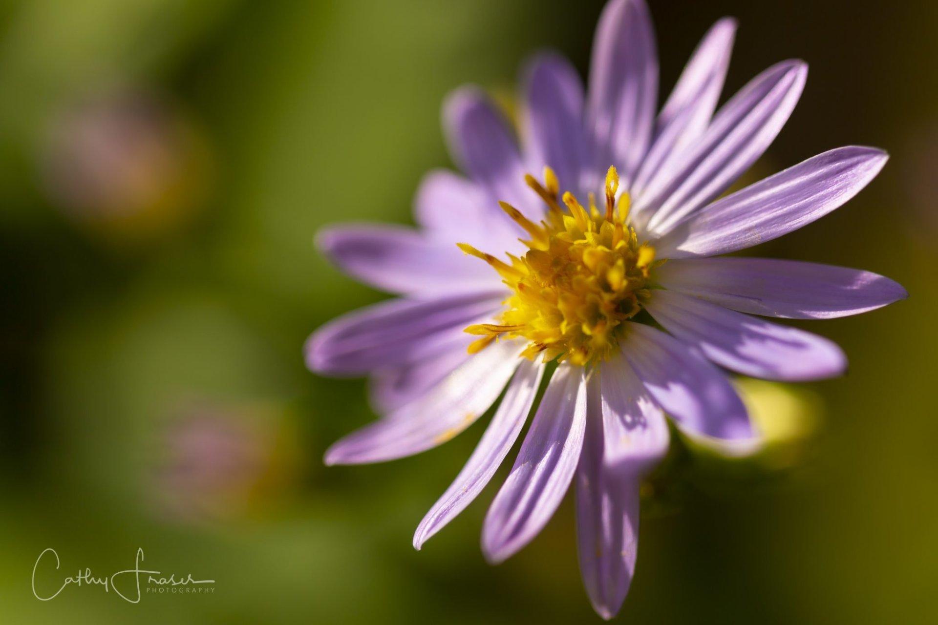 landscape photography of a purple flower