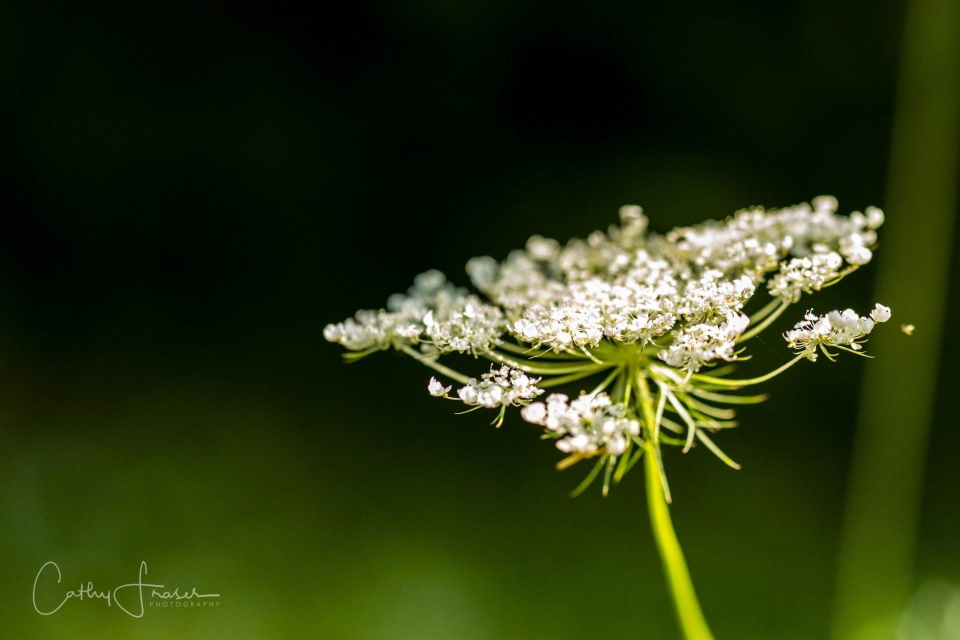 landscape photography of a flower
