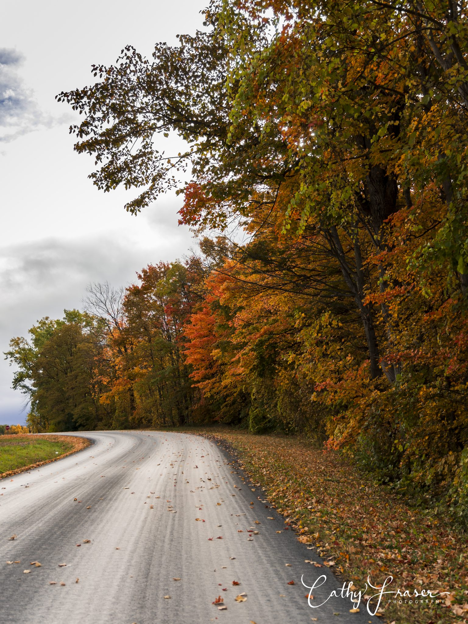 landscape photography of an empty road in the fall in new york