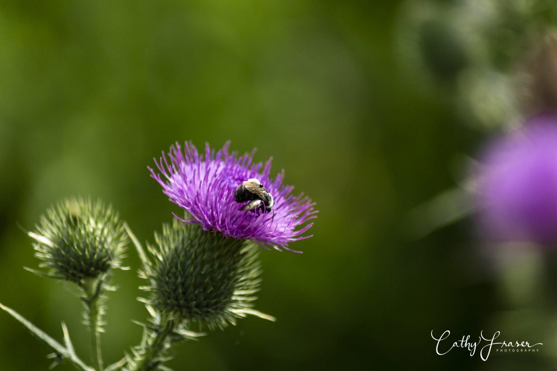 landscape photography of a purple flower at montezuma wildlife refuge