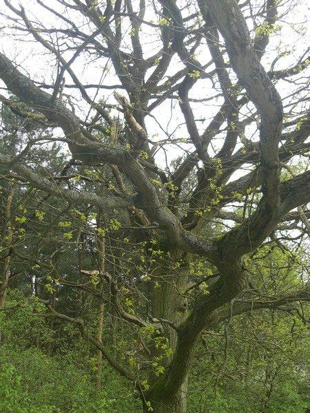 ©2010 - Cathy Read - Gnarled Tree - Digital image