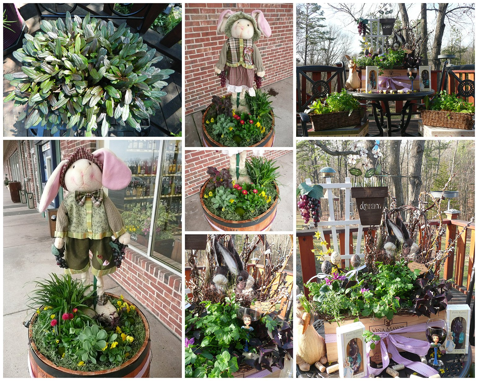 EVEN MORE CONTAINER GARDEN COLLAGES