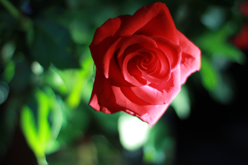 Photography: Flowers in my Garden (5/6)
