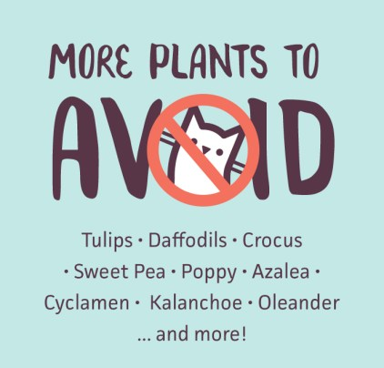 A list of plants you should avoid if you own a cat