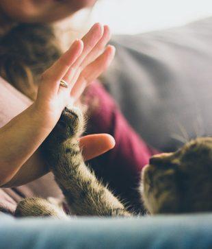 Streicheln einer Katze
