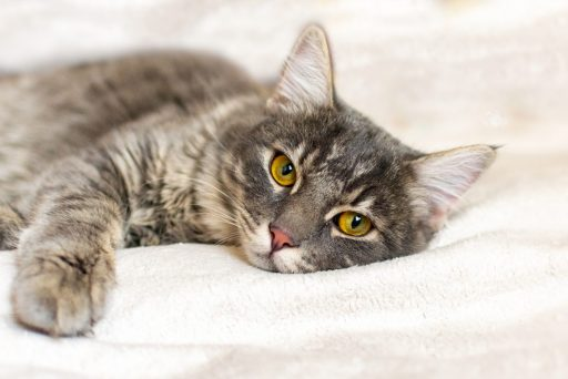 Watch out for symptoms of cystitis in your cat