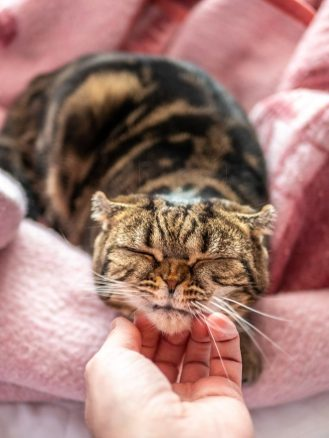 Every cat enjoys a scratch under the chin but watch out for excess itching
