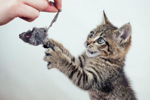 Engagiere einen Katzensitter, um sicher zu gehen, dass dein Kätzchen genügend Spielzeit bekommt.