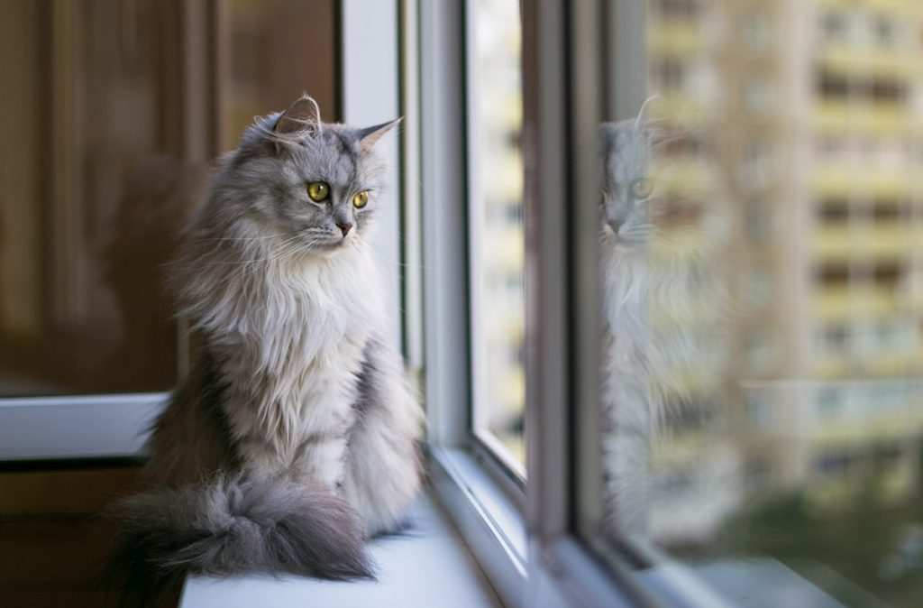 What cat breeds are suited to apartment living