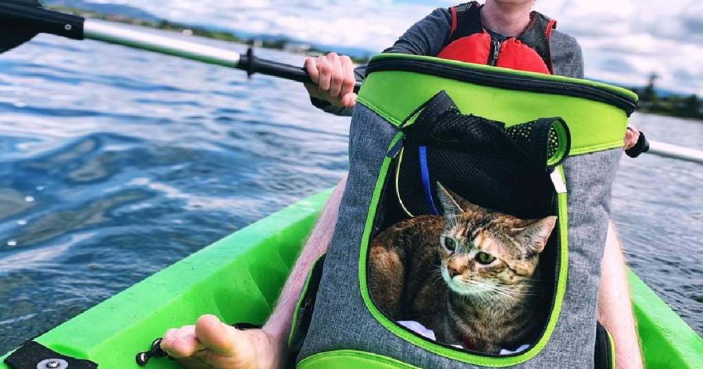 Choosing A Cat Carrier: What To Consider