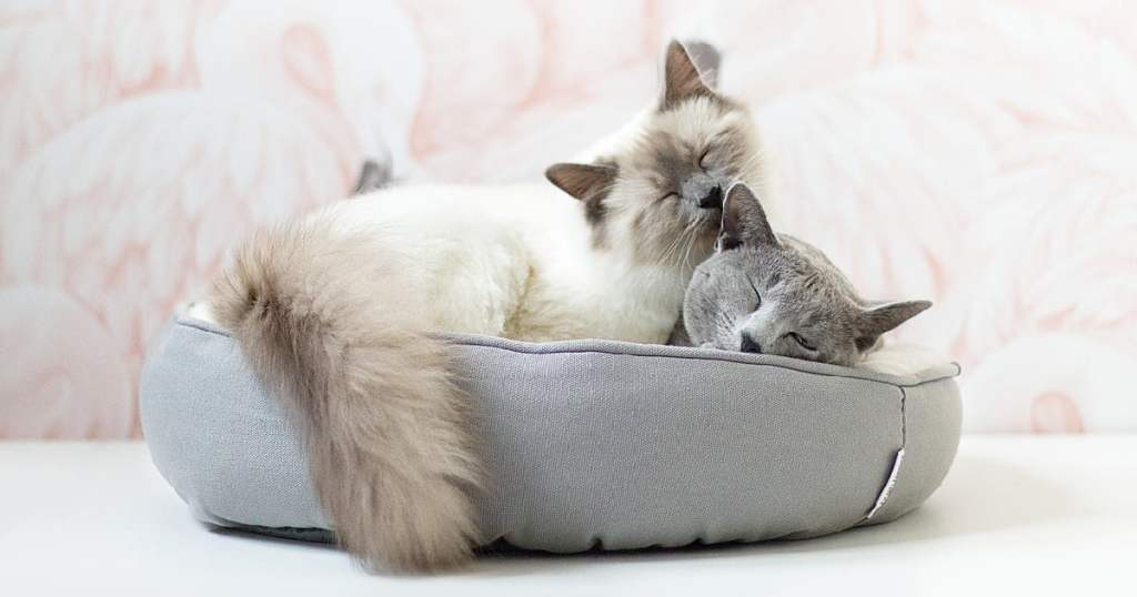 Introducing Cats To Each Other: Tips For Bringing Home A New Cat