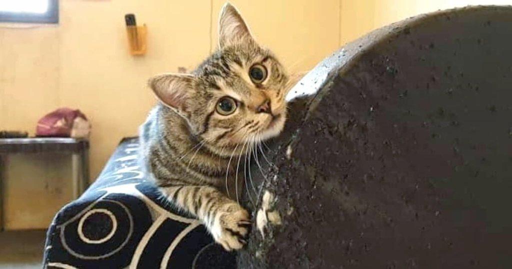 CattyCorner: Why Cats Enjoy Scratching Stuff
