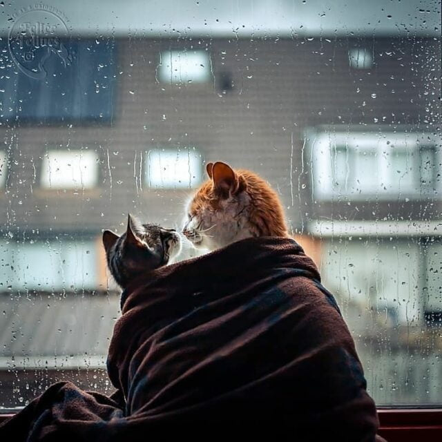 CattyCorner: How To Help Your Thunderstorm Scaredy Cat