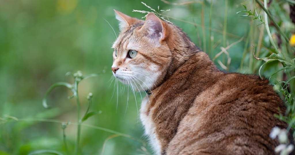 Researchers Report Cat Parents Fall Into 5 Categories Of Perspective Regarding Outdoor Life