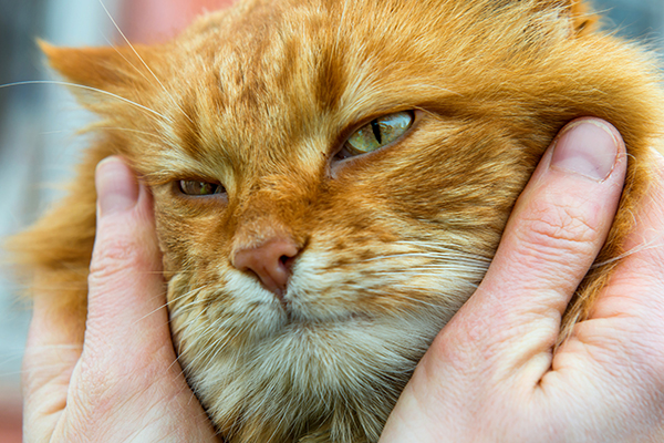 How Long Do Cats Live? Facts About the Average Cat Lifespan
