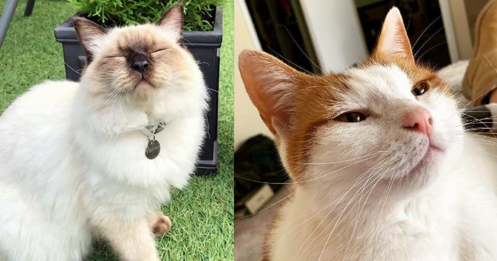 Study Proves What Cat Lovers Already Know About Slow Blinks & We Can't Help Smiling