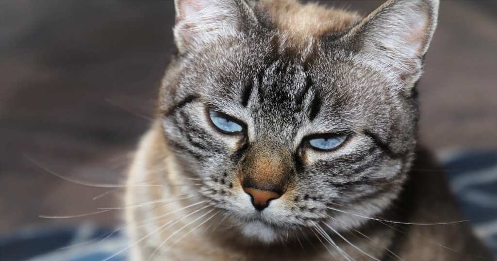 5 Ways Your Cats Are Telling You They're Unhappy