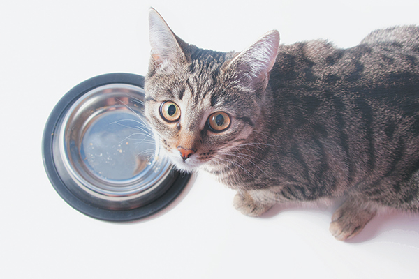Why Is My Cat Always Hungry? 5 Reasons