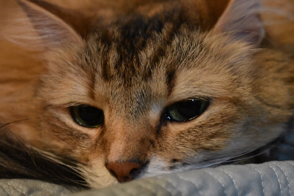 What Causes Watery Cat Eyes and Do You Need to Visit a Vet?