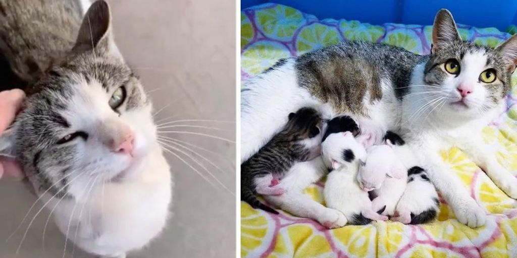 Cat Comes to the Right House and Asks to Be Let In So She Can Have Her Kittens