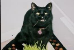 sullycat