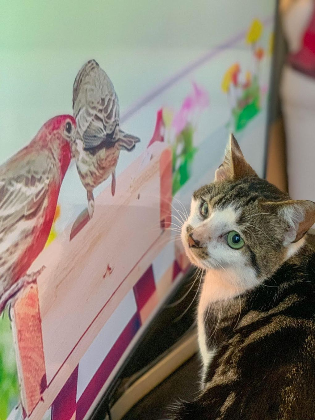 A cat looking at a drawing Description automatically generated with low confidence