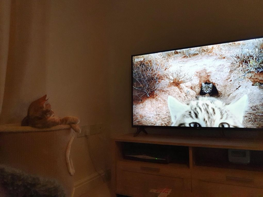 A cat watching a television Description automatically generated with low confidence