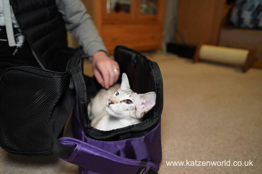 Common Questions Cat Owners Have When They Travel