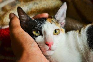 cat-image-2.jpg