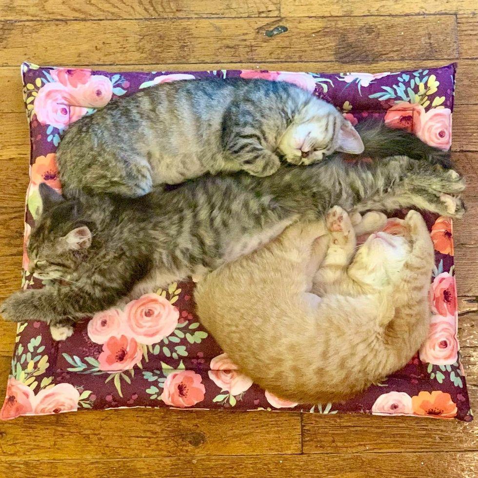 sleepy trio kittens