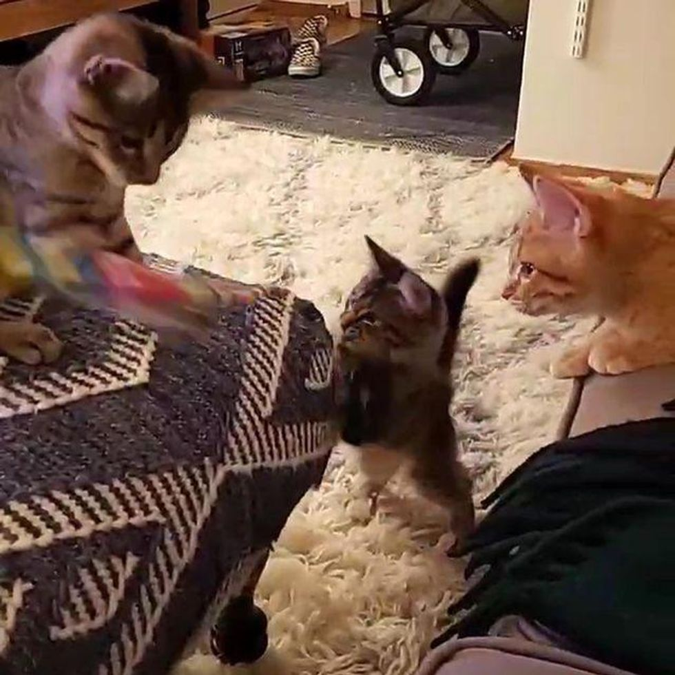 Family Looking to Adopt Pair of Kittens But Find Out They Have Another Sibling Who Needs a Home