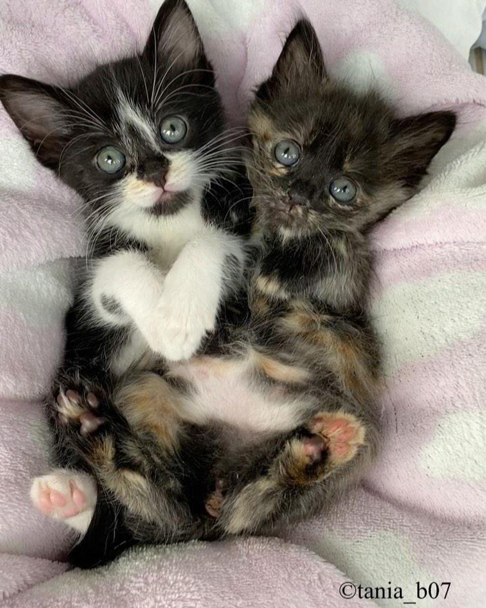 sweet snuggly kittens