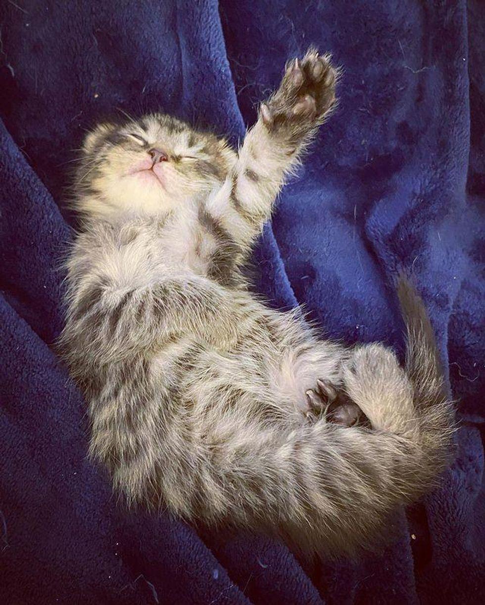 sleepy tabby kitten