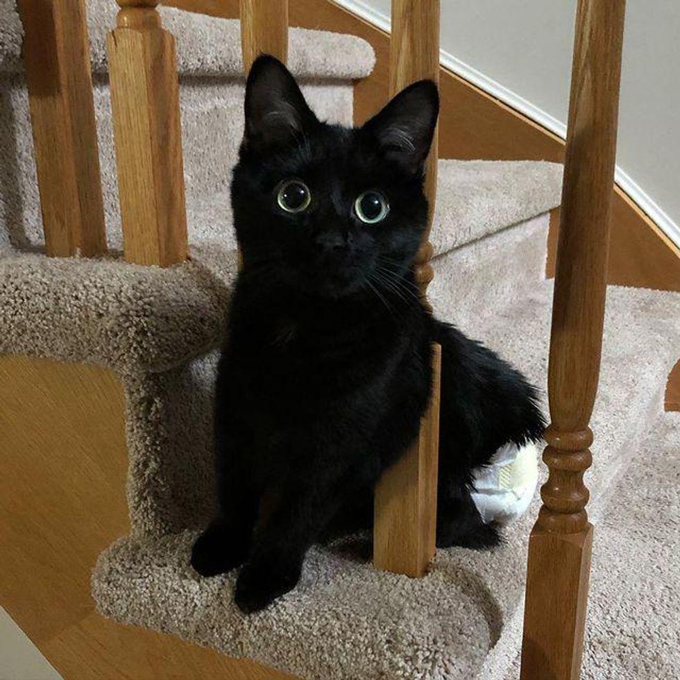 cat big eyes