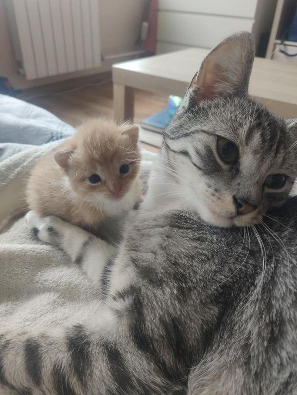 Kitten Cries His Way into the Arms of Affectionate Cat After He Was Found Under Car in a Box
