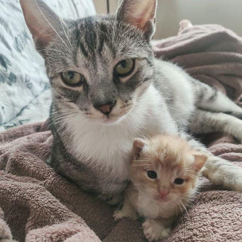 cat and tiny kitten