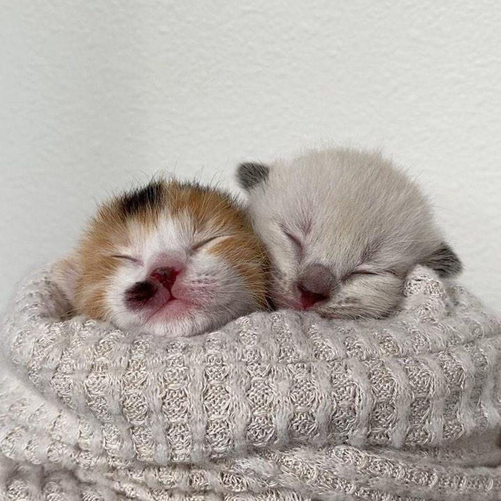 purrito kittens
