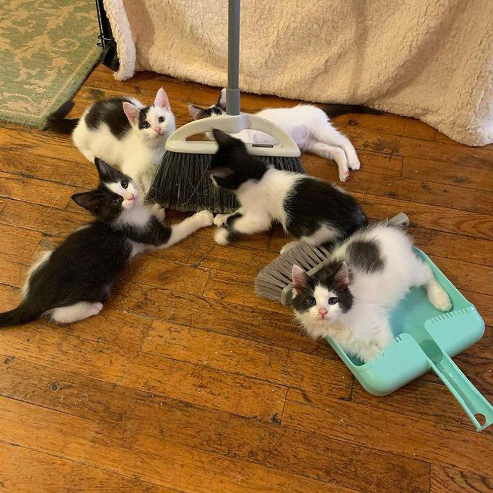 doing chores with kittens