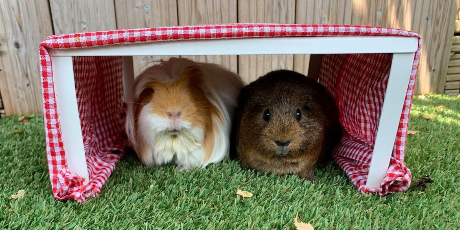 Muggy Moggies and Hot Doggies: How to Make a DIY Pet Sun Shelter During the Heatwave