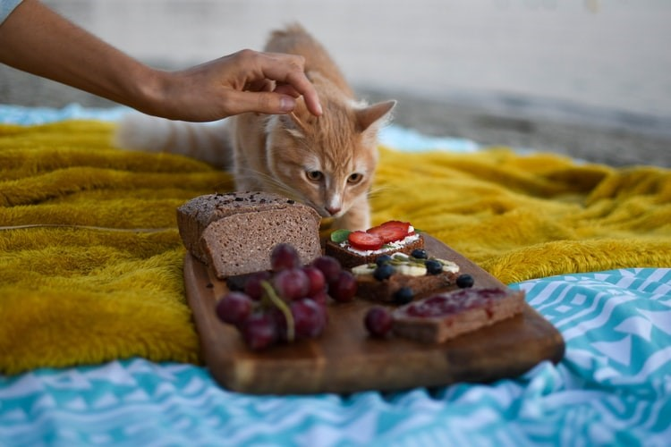 Guide To Cat's Food Transition