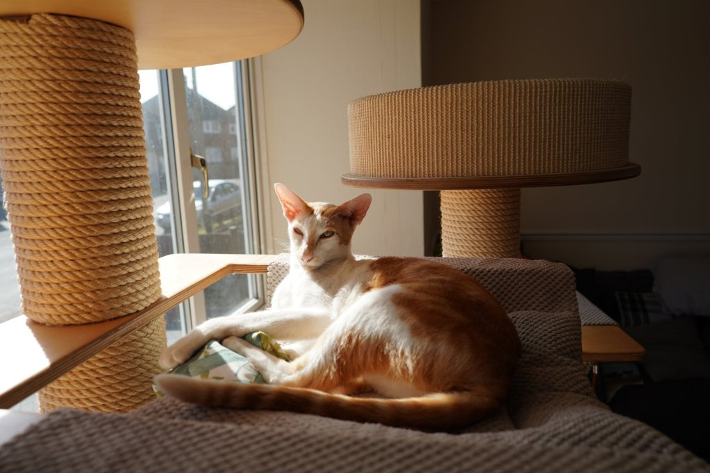 Renegade: Feline fun in the Grand Cat Tower With my Rustling Cushion