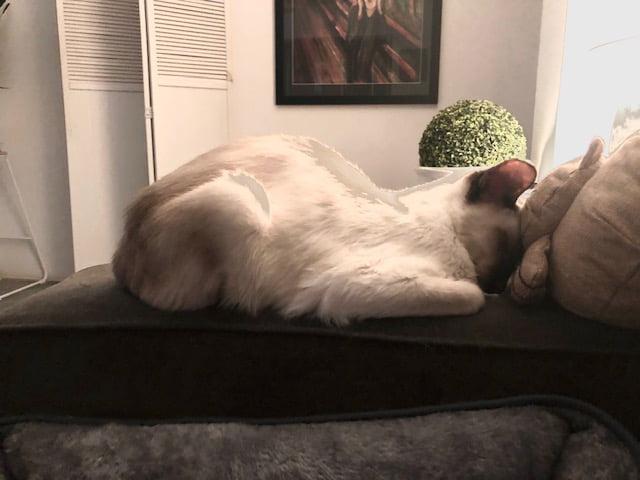 Guest Cat Story: Lulu