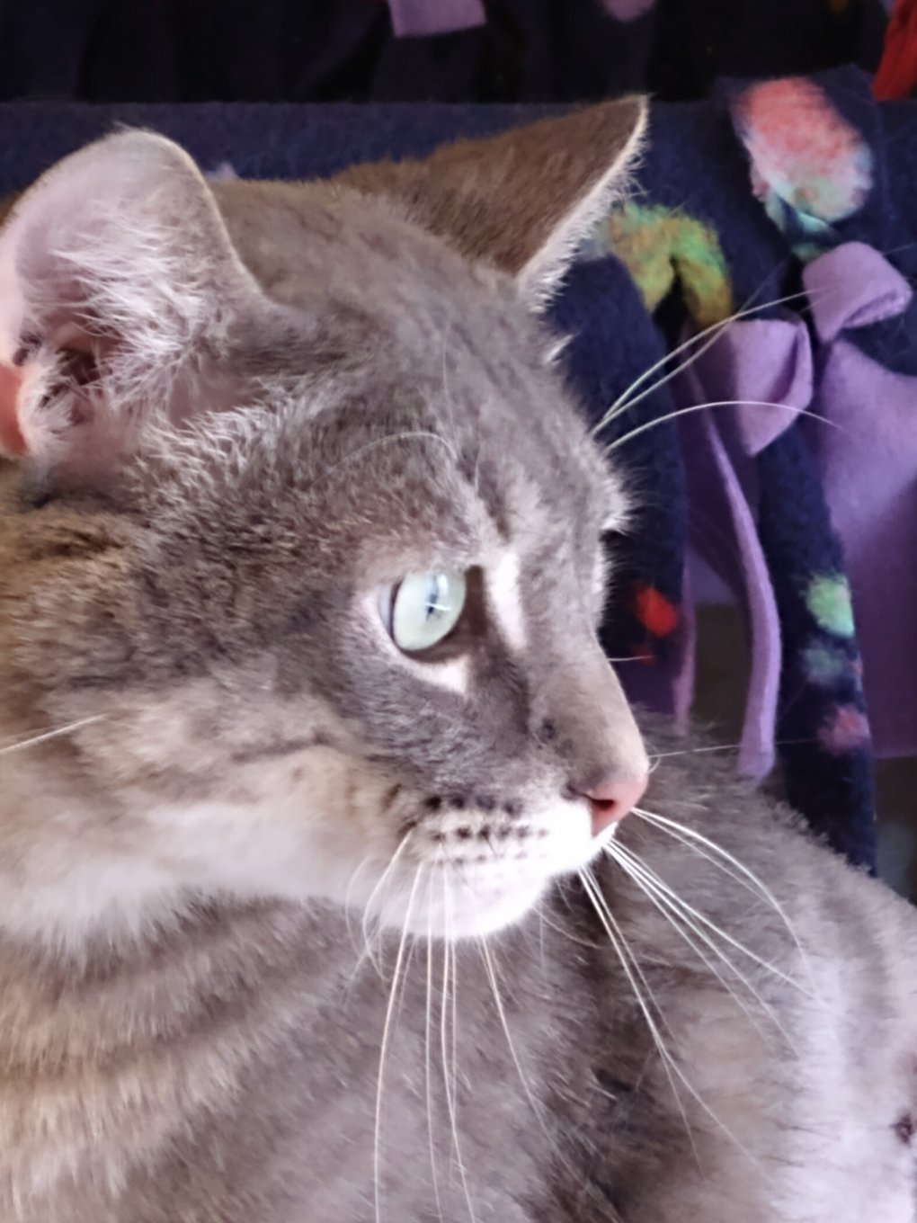 Purrsday Poetry: Sweet Ray